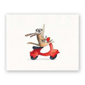 scooter-meerkat-web1